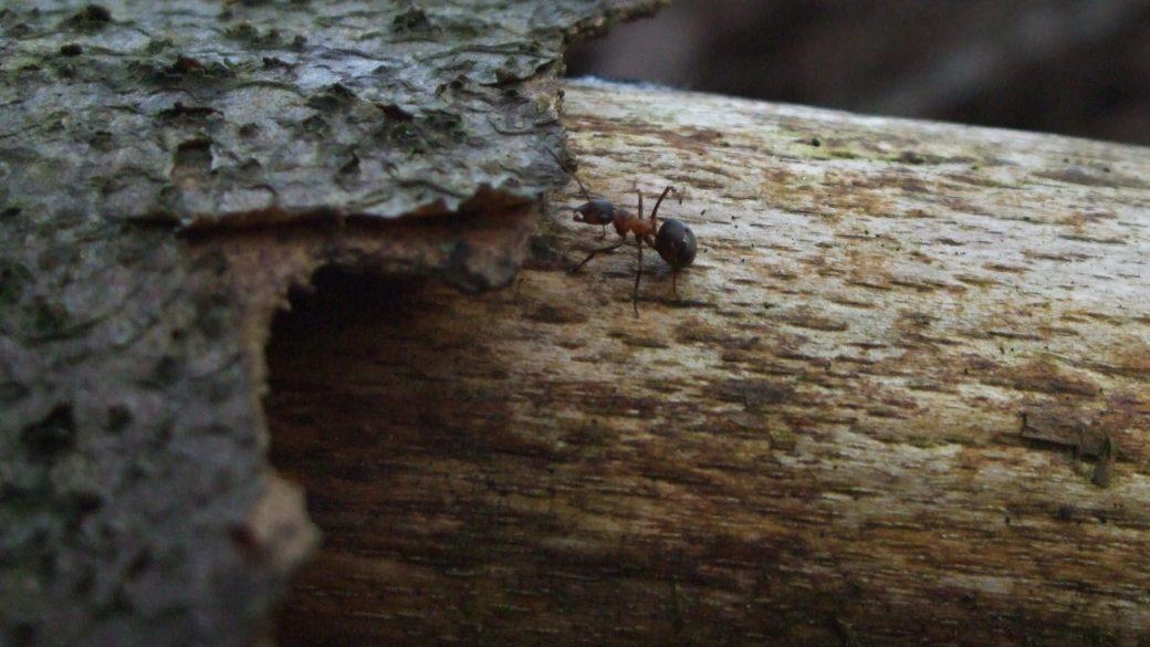Kleine Tiere im Wald