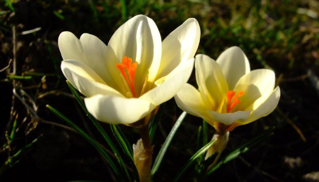 Bunte Frühlingsgrüße aus dem Garten