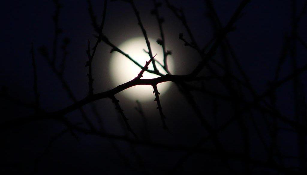 Die Nacht des Vollmondes