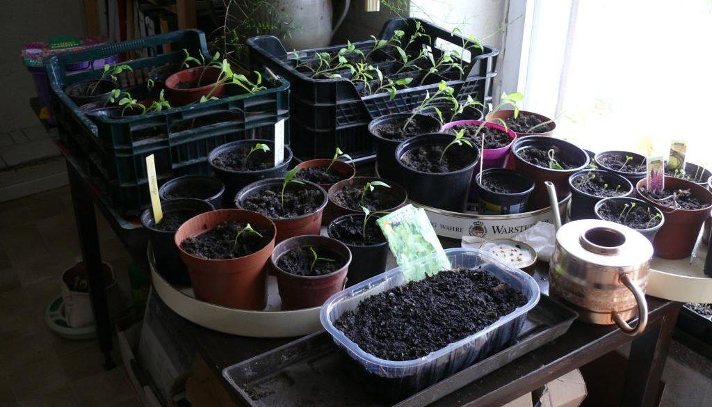 Mein zweites Gartenjahr beginnt