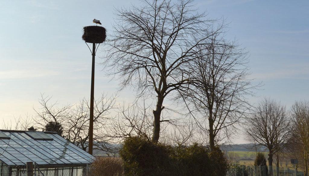 Der Storch von nebenan